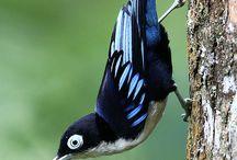 Bird nerd / by Tracy Holland