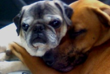 My Dogs  / by Lia Brewster
