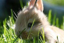 Lindo o coelho