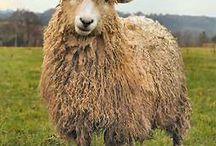 A little fleece / by Joanne Mahlberg