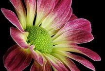 muut kukat