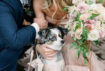 Inspiration: Wedding & Animals