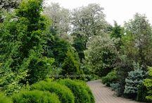 Drzewa  Trees Arboretum Trojanów