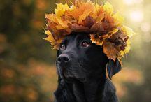 Ms autumn