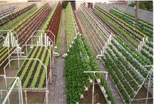 aquaponics for better future