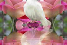 A Dove for sending flowers into Heaven for My dove,My Only Love.