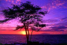 SUNSETS  / by Marsha Lingle