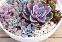 Garden Dizajn