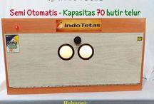 No-HP-0822-5705-4455-(Telkomsel) | PUSAT Alamat Jual Mesin Penetas Telur / Alamat Jual Mesin Penetas Telur, Alamat Jual Penetas Telur, Alamat Mesin Penetas Telur Di Jakarta, Alamat Penjual Alat Penetas Telur, Alamat Penjual Alat Penetas Telur Di Jakarta,