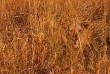 Animals: Camouflaged