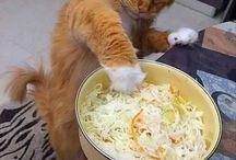 中々サラダが上手く作れないわ