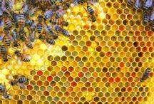 Bee havin