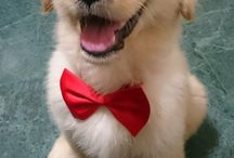 Fancy Dancy Puppers