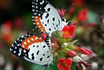 Butterflies / by Candy Rick