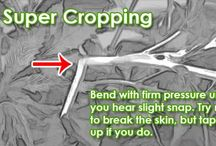 Super Cropping - Marijuana Technique to Increase Yields / Learn how to get bigger yields with the same number of plants, no special equipment needed