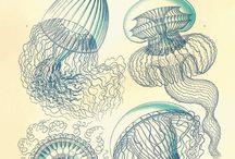 creature del mare