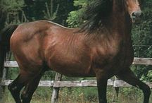 Horses / by Ginger Schroder