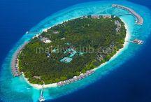 Dusit Thani Maldives / Maldivler Dusit Thani, Tayland'ın güleryüzlü hizmetinin, Maldivler'in güzelliği ve konumunun mükemmelliğiyle birleşmesi ve buna mükemmel dalış alanları, lezzetli yemeklerin de eklenmesiyle Maldivler'de önde gelen otellerden biridir.Kumsal oldukça güzeldir ve tüm adanın çevresini kesintisiz olarak dolaşır. Tesis hakkında daha detaylı bilgi için; http://www.maldiveclub.com/maldivler-otelleri/dusit-thani