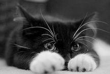 Cats / by Makobi Scribe