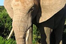 Worlds Biggest Animals