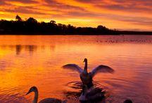 мир и красота