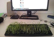 Die Tastatur mit Natur / Bock auf Arbeiten - oder doch lieber erstmal Kresse essen? Etwas Spaß im Büro muss sein! Alles was du brauchst: eine ausgediente Tastatur & etwas Kresse-Saatgut. Die Kresse säst Du vorsichtig zwischen die Tasten (Tastatur ausgesteckt und/oder Batterien entfernt) und besprühst sie regelmäßig mit Wasser. Nach 2-3 Tagen fängt die Kresse an zu sprießen - fertig ist die #Kressetastatur.