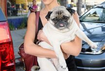 Celebrities and their Pets / by Kimberly DeCuffa