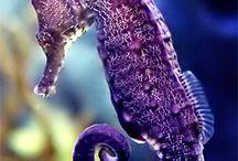 동물-해양생물