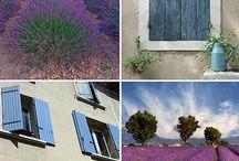 Lavender buildings, houses