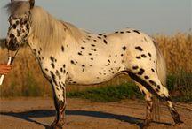 mini koni