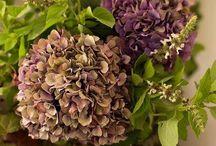 fiori:foto