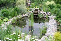 Giardino: laghetto