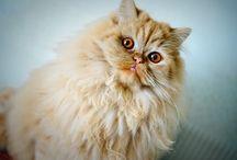 Koty  Cats  le Chien / http://videostudio.idsl.pl/