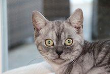 Grisu und Sylvester / Katzen