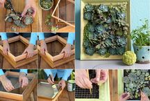 Garden Projects / all sorts of projects to do with plants