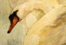 Steven shortridge  cigni.con contorni evanescenti