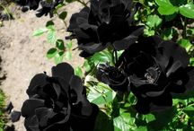 mustaa