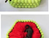 Dogs n Tennis