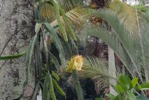 plants of South West Florida