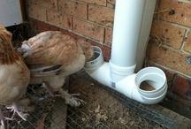 Chicken Feeders & Waterers