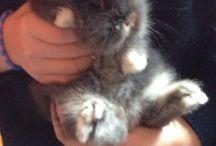 Pelusa / El conejo enano de Aitana