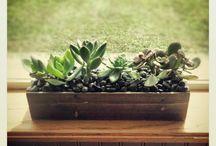 succulents / Bizzness schnizzness