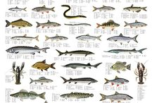 Freshwater Fish / Freshwater fish identification , habits , habitats and methods used in catching