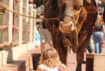 Events in the Stockyards! / From Easter Egg Hunts to Santa, come celebrate the holiday's with the Stockyards!
