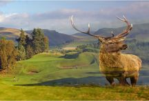 Golf plus Scotland / We're committed to not just delivering Scottish golf, but bringing the country alive too. Trust us. When you come to compare notes with people who've played Scotland, those of you who engaged the country as well, will be nearer the flag. We've made a series of club and country blended images to emphasise this. Please view and enjoy