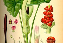 Herbář / herbář rostlin
