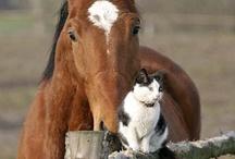 Animals / My love for wildlife❤️❤️❤️