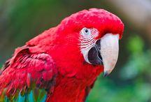 ANIMAL • Parrot