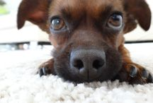 Sissy Doggystyle