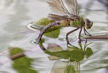 Змеи, рептилии, насекомые...